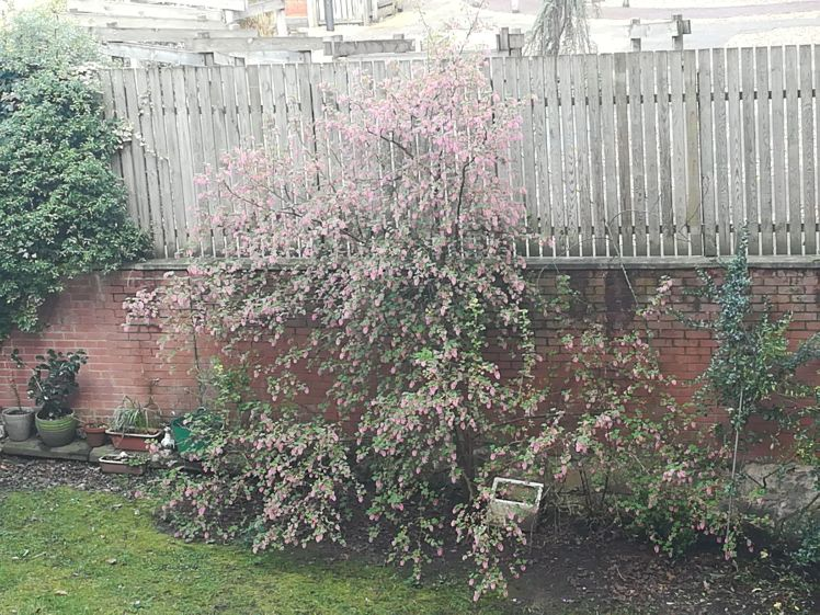 Grace's Courtyard